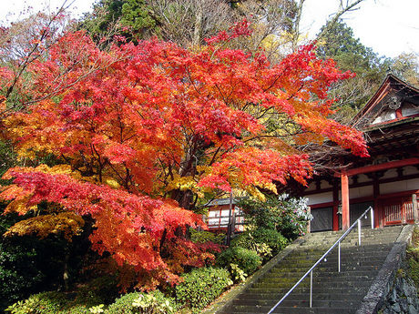 奈良県談山神社の紅葉
