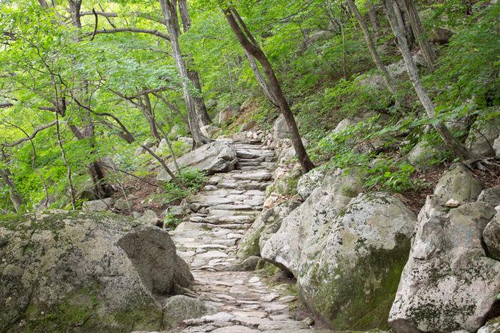 登山道の石段