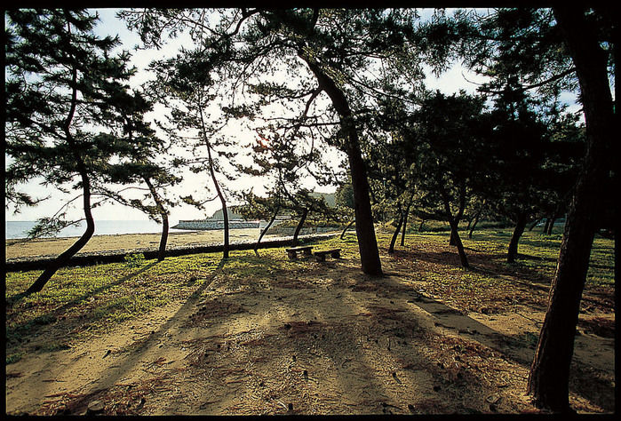 木に囲まれたキャンプサイト