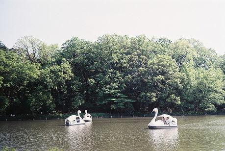 石神井公園の石神井池と池に浮かぶボート