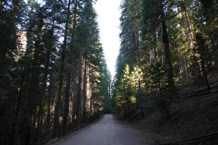八ヶ岳山麓の山道