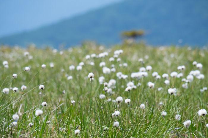 尾瀬の草原