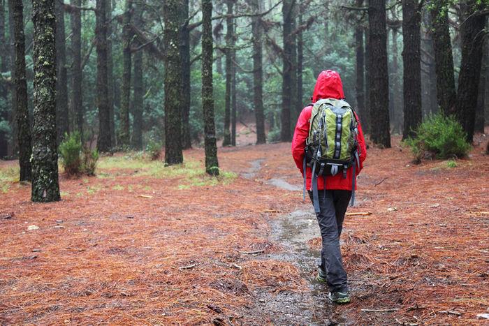 リュックを背負って森林を歩く女性
