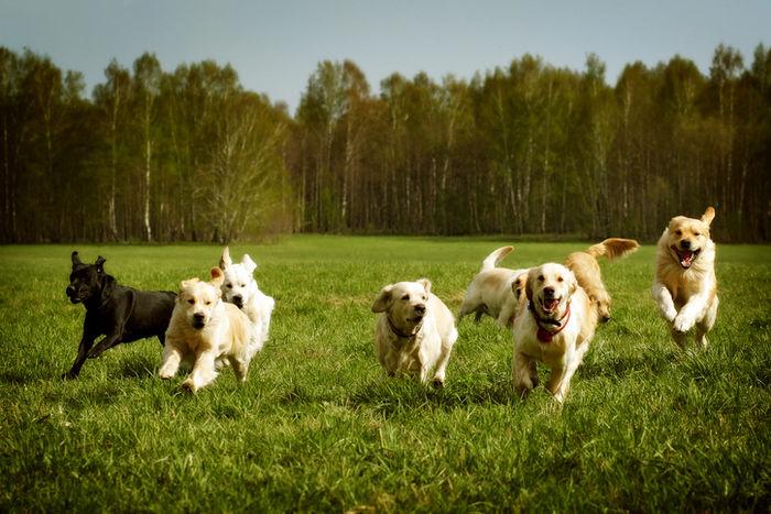 芝生を元気に駆け回る犬たち