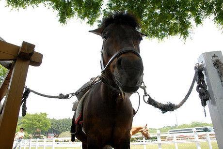 牧場で飼育されている馬