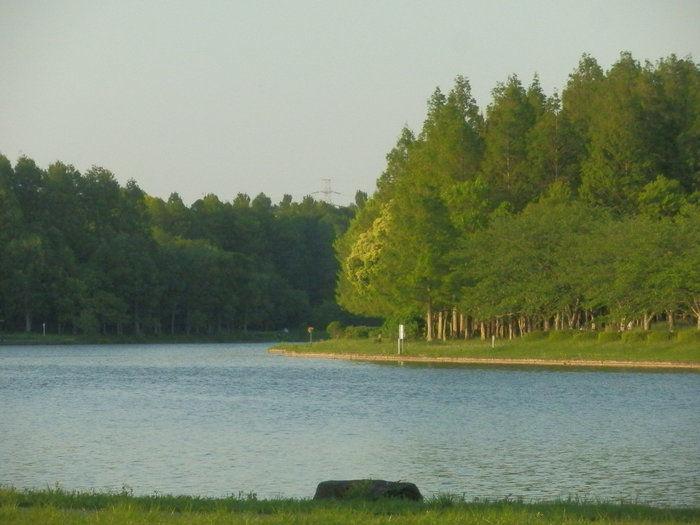 水元公園の池