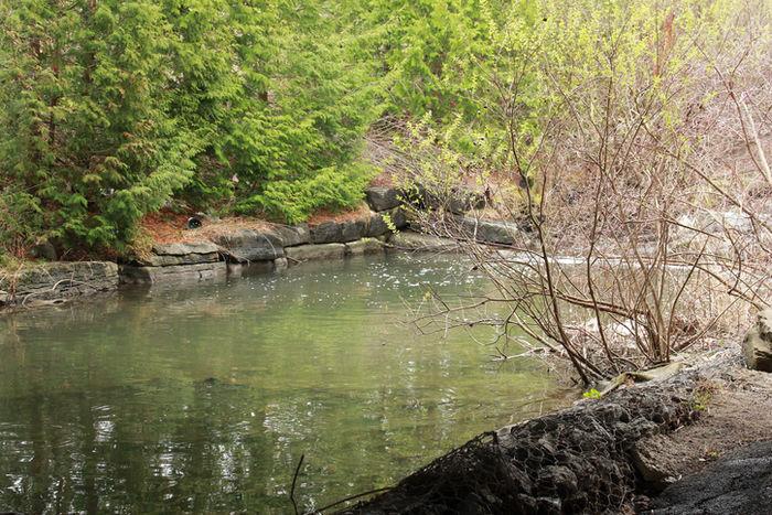 智光山公園の前山の池