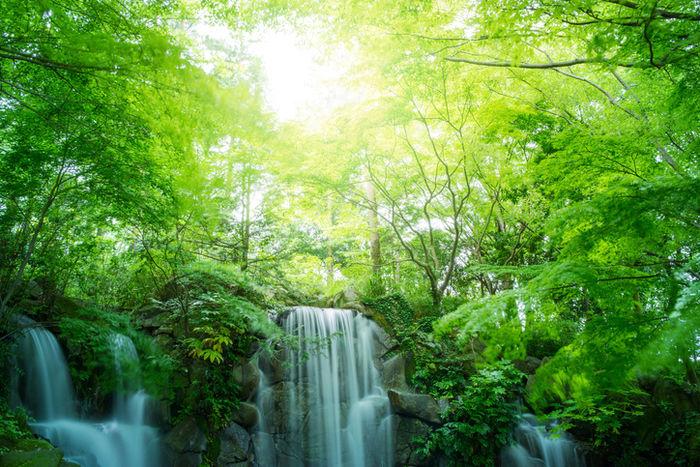 滝が流れる森林