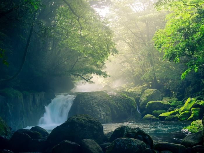 自然が広がる濃溝の滝