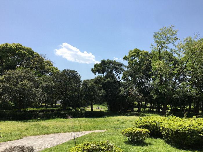 夢の島公園の広大な芝生の様子