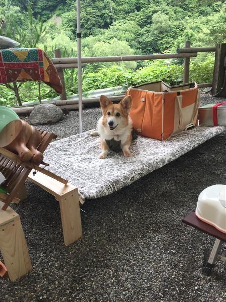ドッペルギャンガーの『ワイドキャンピングベッド』の上に座るコーギー