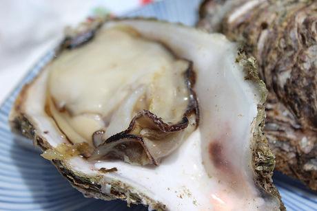殻に入った生牡蠣