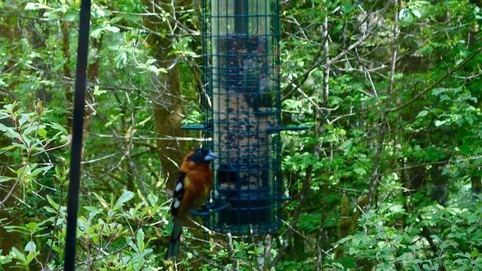 ポートランド「野鳥の楽園」の野鳥