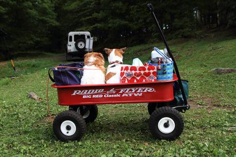 荷物や犬を乗せたラジオフライヤー