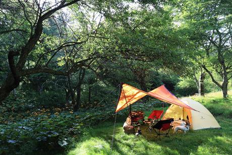 森林の中のキャンプ