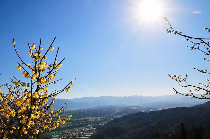 埼玉県秩父市、宝登山から見える景色