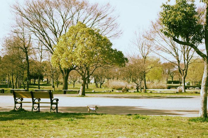 舎人公園の景観