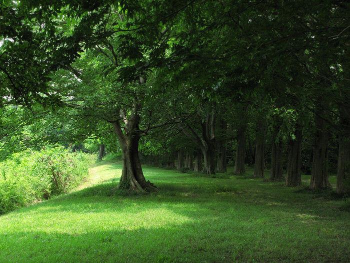 森の中の広場