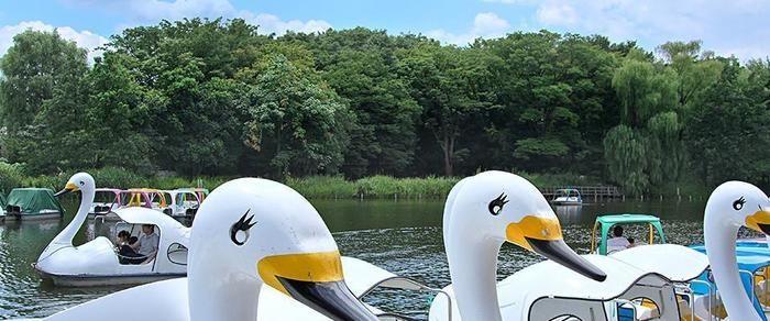 石神井公園のボート乗り場の様子