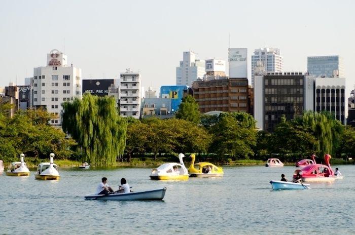 スワンボードや手漕ぎボードを楽しむ人々