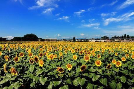 東京から行ける!公園・庭園の季節別お花スポットおすすめ21選