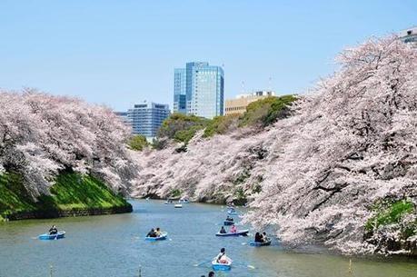 千鳥ヶ淵緑道の桜と湖でボードに乗っている人々