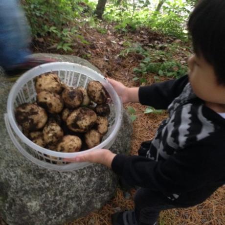 収穫したたくさんのジャガイモを持った男の子