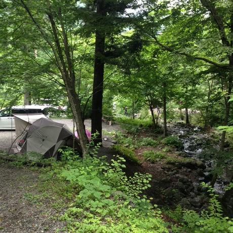 森の中の道志川