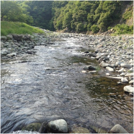 青野原オートキャンプ場の道志川