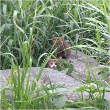 草むらの中の猫たち