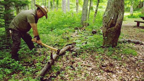 森で木を伐採している様子