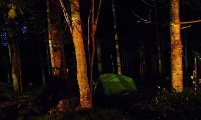 夜の森と緑のテント