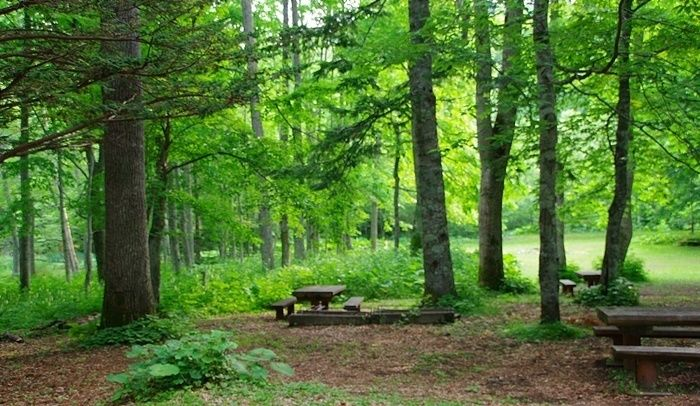 新緑の森の中の様子