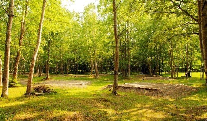 日に照らされる森の中
