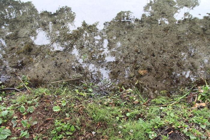 青木湖の水の透明度