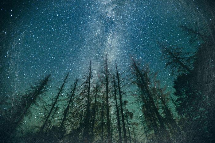 森の中から見える満天の星