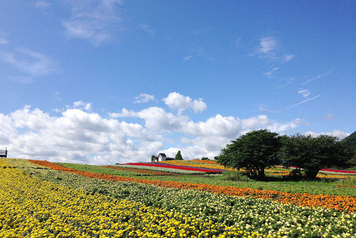 宮城県加美町の花畑