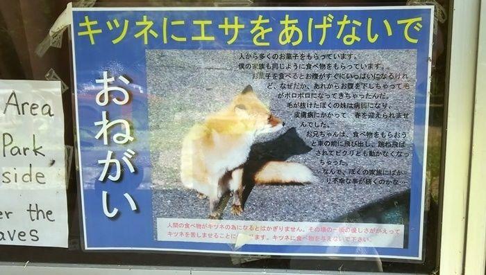 野生動物に関する注意書き