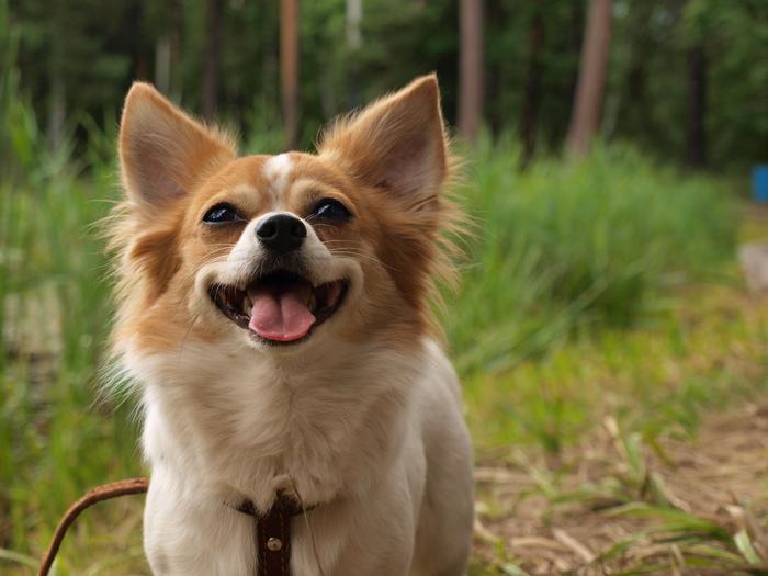 楽しそうに走り回る犬