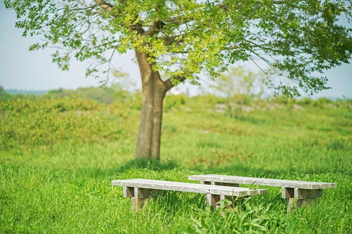 芝生のキャンプサイトのベンチ