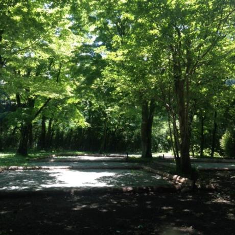 芦ノ湖キャンプ村のフリーサイトの様子