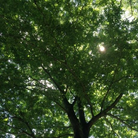 芦ノ湖キャンプ村の木々