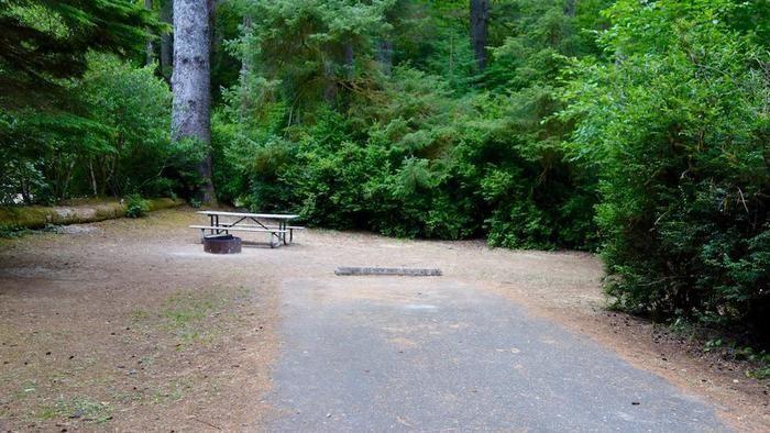 広々としたキャンプサイトの様子