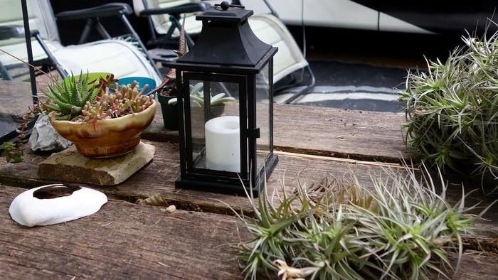 観葉植物で飾られたテーブル