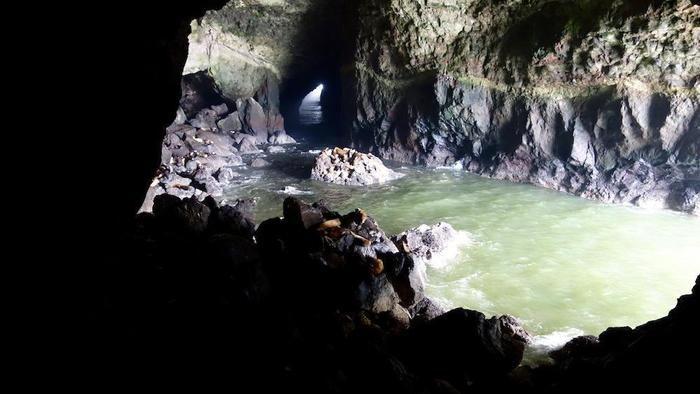 シーライオン洞窟の様子
