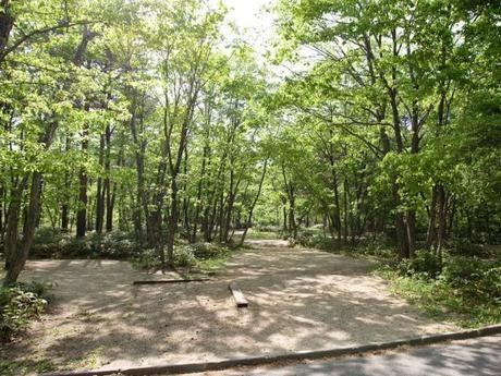 森と木漏れ日
