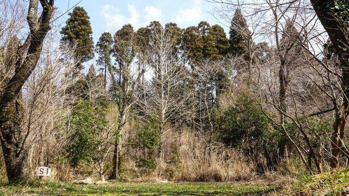 有野実苑オートキャンプ場の木々に囲まれたサイト