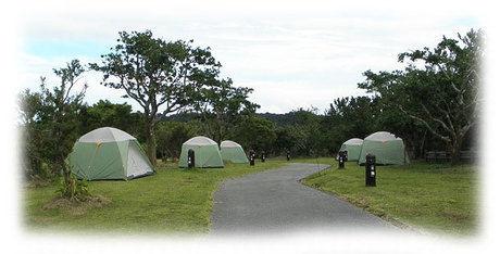 やんばる学びの森オートキャンプ場に並ぶテント