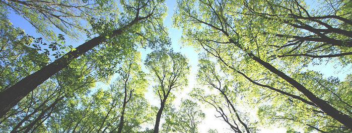 新緑の森と青い空