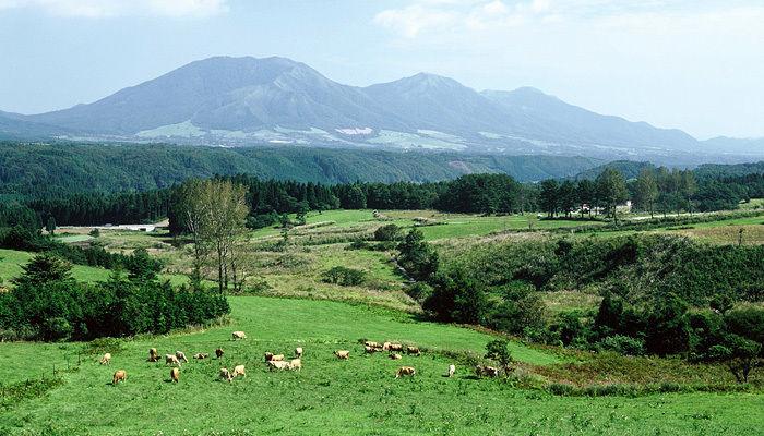 蒜山高原キャンプ場から見える牧場の風景